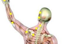 מהי שיטת הפאשיאל מניפוליישן וכיצד שחרור רקמות חיבור מוריד כאבים כרוניים?